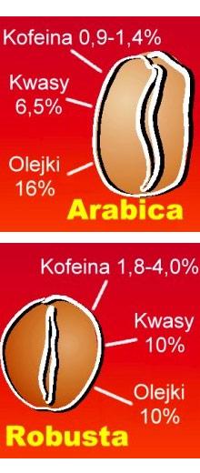 Jaką kawę wybrać? Arabica czy robusta?
